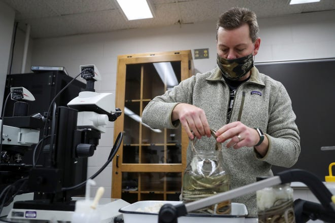 Robert Jadin picks up a preserved vine snake specimen at the University of Wisconsin-Stevens Point in Stevens Point, Wis. Through the course of his research, Jadin has discovered multiple new species of snakes.