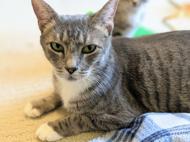 Mother Goose's adoption fee would be $20, which includes her spay surgery, vaccines, and microchip + registration.