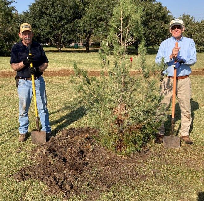 Lubbock Memorial Arboretum member Cal Hoffman and president John Wallis plant an Afghan (Pinus eldarica) pine on the grounds.