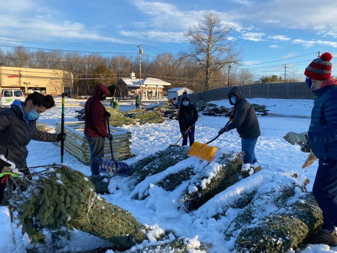 Scouts clear snow from Christmas trees and prep them for delivery.