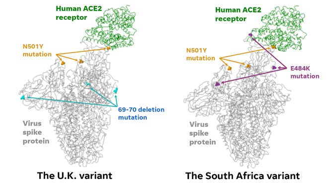 Virus mutations differ among the U.K. and South Africa variants.