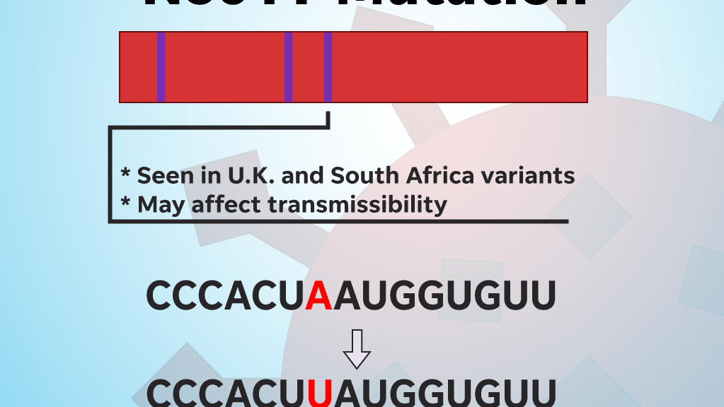 The N501Y mutation may affect transmissibility.