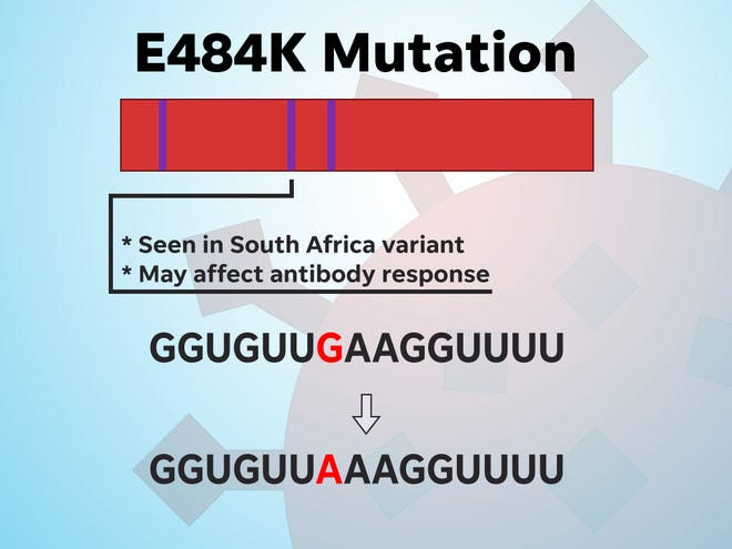 The E484K mutation may affect antibody response.