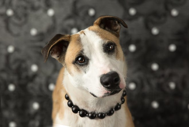 Sunflower is looking for more people to support the Wayne County Dog Shelter's medical fund to provide treatment for stray dogs that need extra care.