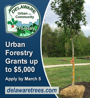 Municipalities, homeowner associations and nonprofits in Delaware can apply for competitive matching grants up to $5,000 for tree planting or tree management projects on public land.