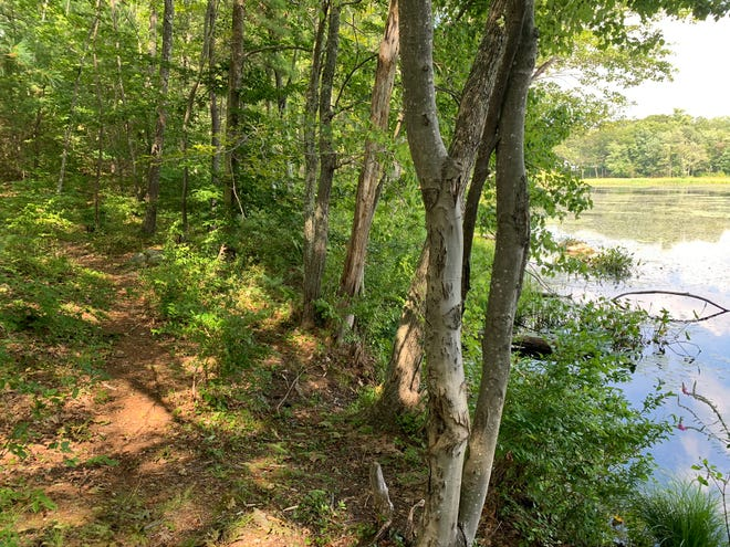 The North County Land Trust recently acquired a 157-acre property off Keyes Road in Gardner.