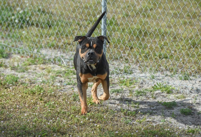 A look within the St. Lucie County Temporary Animal Shelter property, located at 100 Savannah Road in Fort Pierce.