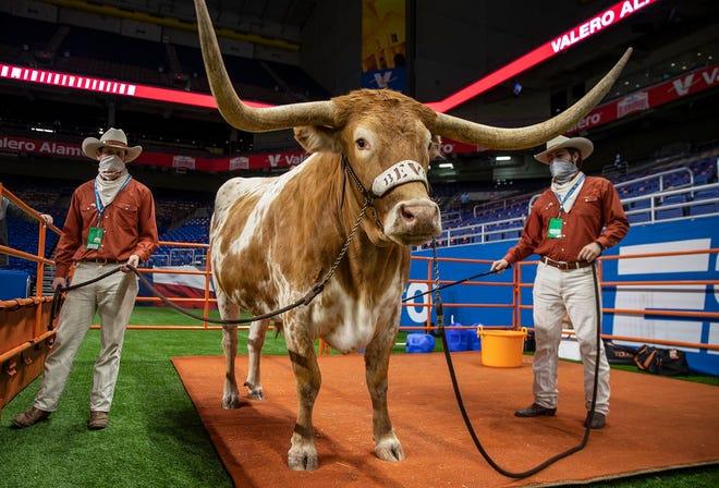 Bevo XV roams the Alamodome's sideline before Texas took on Colorado in the Alamo Bowl in San Antonio on Dec. 29, 2020.