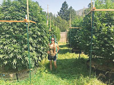 Standing next to nutrient-rich hemp plants in Oregon, Jenifer Holmes of Pratt has turned her passion for growing and sustainable living into a business called Plain Jane Hemp Company. She is a consultant for hemp growers as well as the Western Regional Manager for Kaycha Labs, a hemp-testing company from Florida.