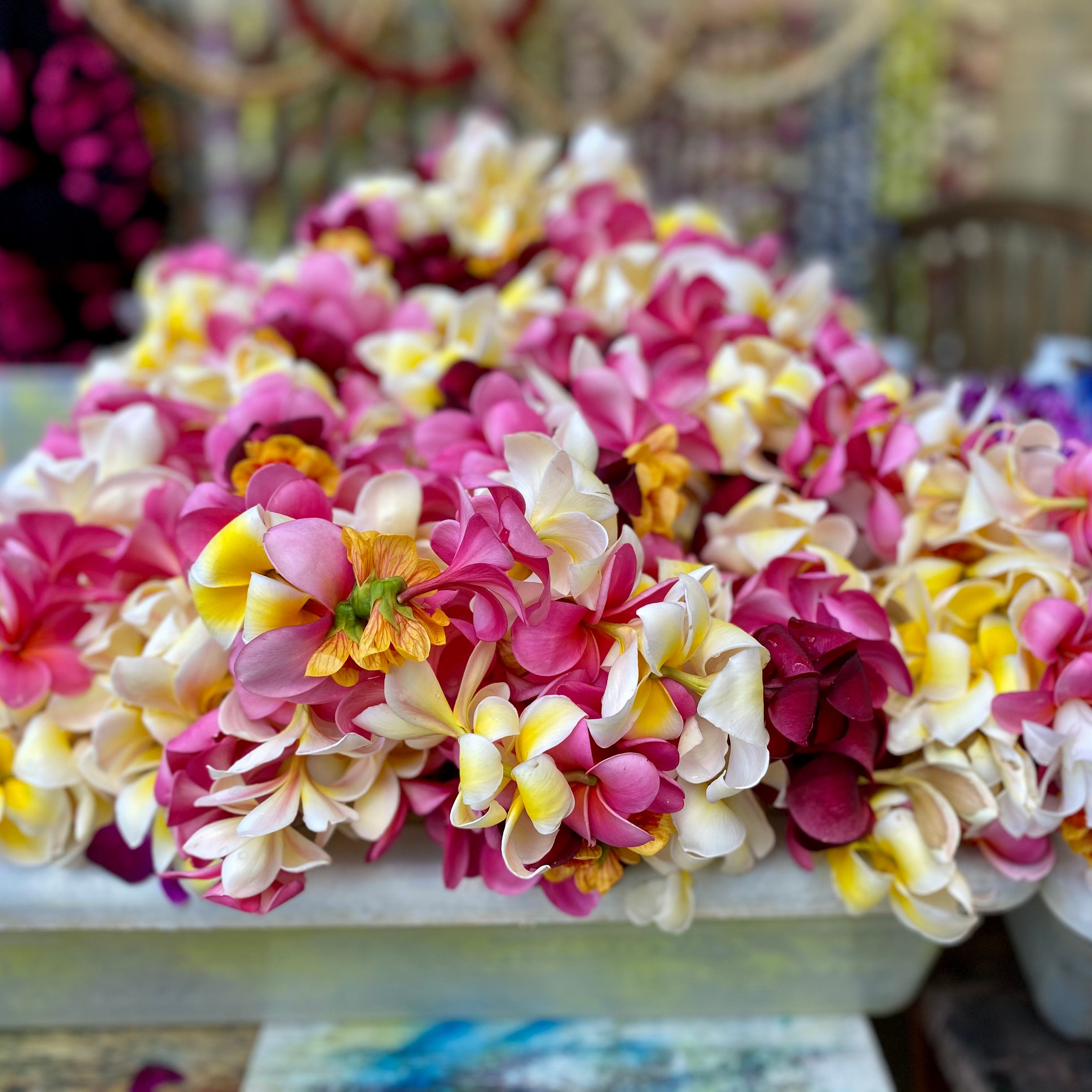 Lei made out of plumeria, which is one of the most popular — and fragrant — flowers in Hawaii.
