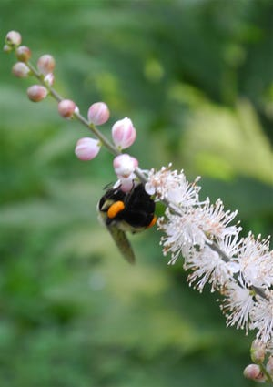 Tops on the must-have list for those new to gardening are tips and sources for planting for pollinators.
