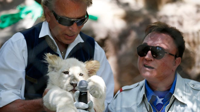 In this Thursday, July 17, 2014, file photo, Siegfried Fischbacher, left, holds up a white lion cub as Roy Horn holds up a microphone during an event to welcome three white lion cubs to Siegfried & Roy's Secret Garden and Dolphin Habitat, in Las Vegas.