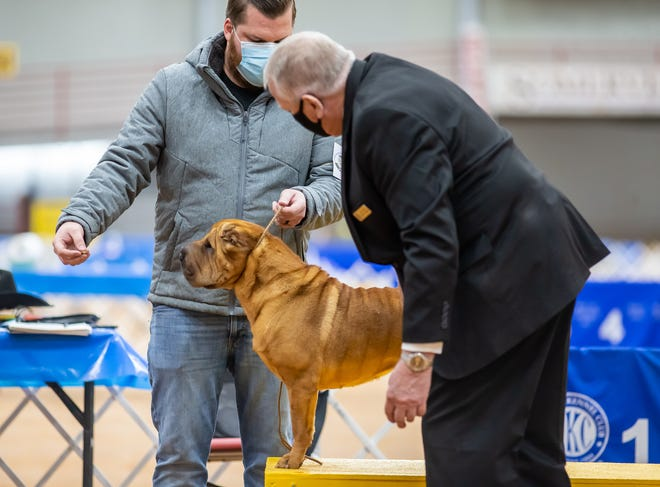 As part of its 50th-anniversary celebration, the Nolan River Kennel Club hosted its annual show at the Somervell County Expo Center in Glen Rose last weekend. Dogs of all shapes, sizes and breeds participated in the three-day event.