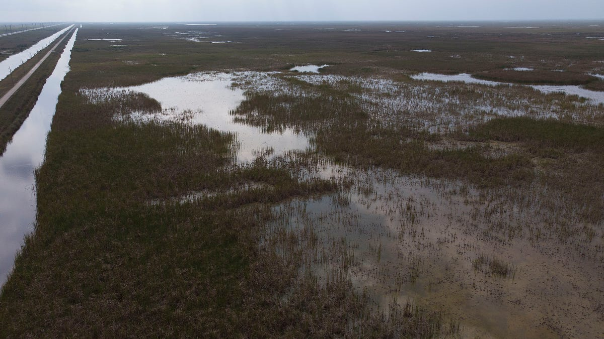 Groups sue federal EPA to rescind Florida wetlands authority 1