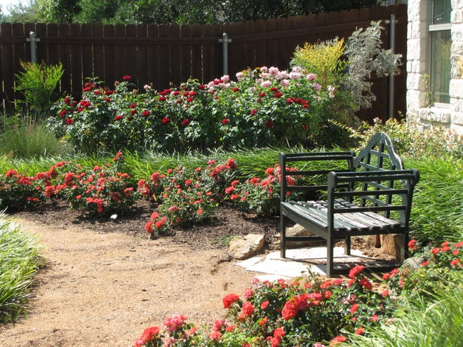 A backyard rose garden at a San Angelo home is shown in this 2016 photo.