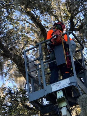 Proper insurance and safety equipment is a necessity before tree removal or large branch pruning is performed on residential and commercial properties.