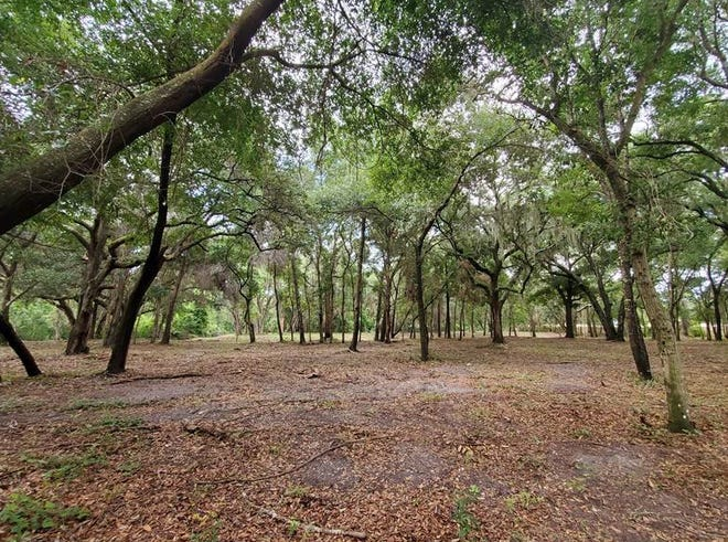 The 5.3-acre property Fernandina Beach officials bought Friday off Drury Road continues a local effort to conserve undeveloped land.