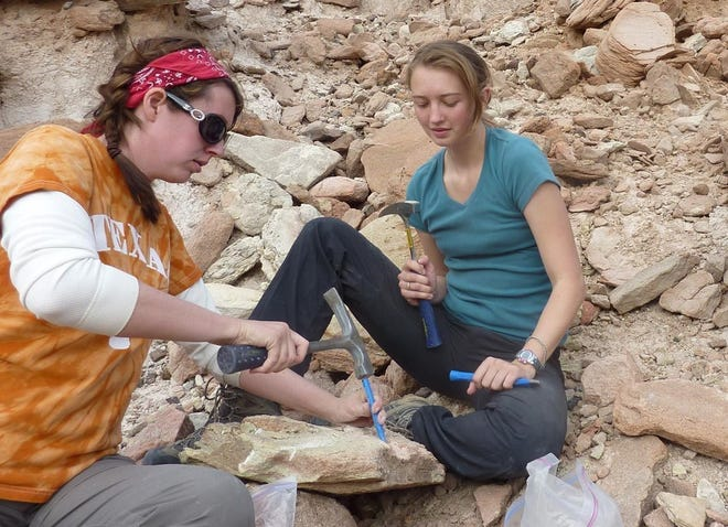 Michelle Stocker, an assistant professor of vertebrate paleontology in Virginia Tech's Department of Geosciences in the College of Science, and Rachel Wallace, a former graduate student at the University of Texas at Austin, are seen excavating the caiman fossil from sandstone in January of 2011.