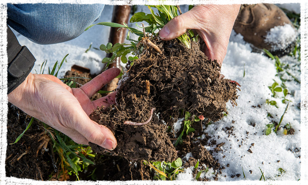 Farmer Rick Clark digs up a small batch of dirt from his field to see if he can find any earthworms at his farm in Williamsport, Ind. Clark is a regenerative agriculture farmer, focusing on soil health and removes chemicals and fertilizer from his fields.