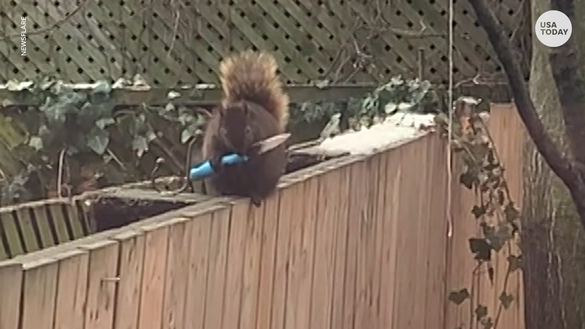 Woman catches squirrel holding a knife in her backyard