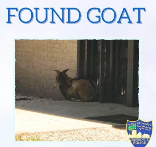 Jacksonville police were attempting to capture an elusive wayward goat seen Saturday at Jacksonville International Airport on the city's Northside. The critter fled into nearby woods and remained on the loose, police said.