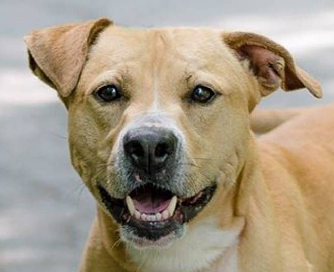 Rocky is a high-energy dog looking for a family who will include him in lots of activities.