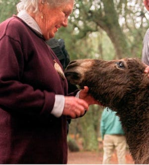 Sandy West  showers her donkey friend, Mary Helen, with love in March 2002.