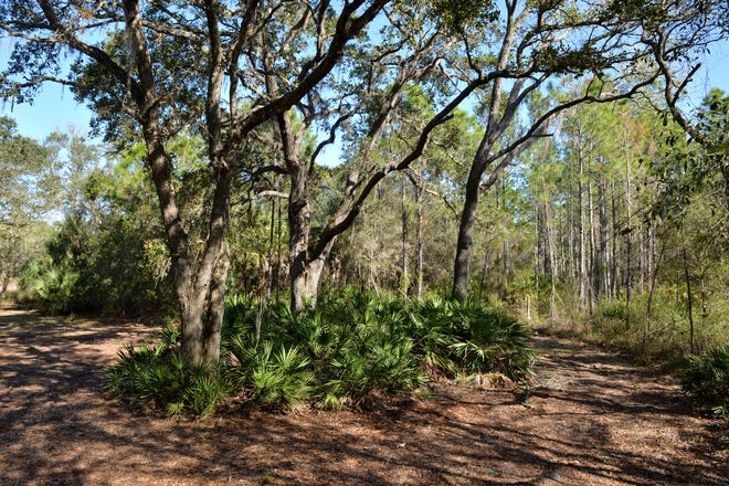 The Forest at Hi Hat Ranch has just 54 home sites on about 270 acres, five miles east of Interstate 75 on Clark Road in Sarasota County. The owners of Hi Hat Ranch are seeking approval for a proposal to develop the property's remaining 10,000 acres.