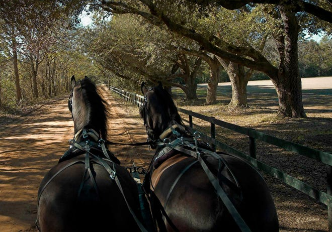 """""""Coachman's View"""" by Mike Kleiman captures the uniqueness of Aiken's horse community in a photograph. He has published two books two coffee table books: """"Aiken's Equines"""" and """"Aiken, As I See It."""""""