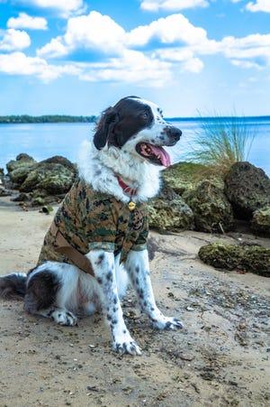 II Marine Expeditionary Force Information Group celebrates National Dog Day at Camp Lejeune, Aug. 26, 2020. National Dog Day is celebrated to encourage adoption.
