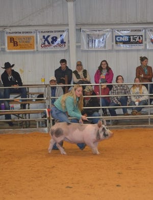 Jamie Lavergne shows her pig this year as a senior FFA competitor.