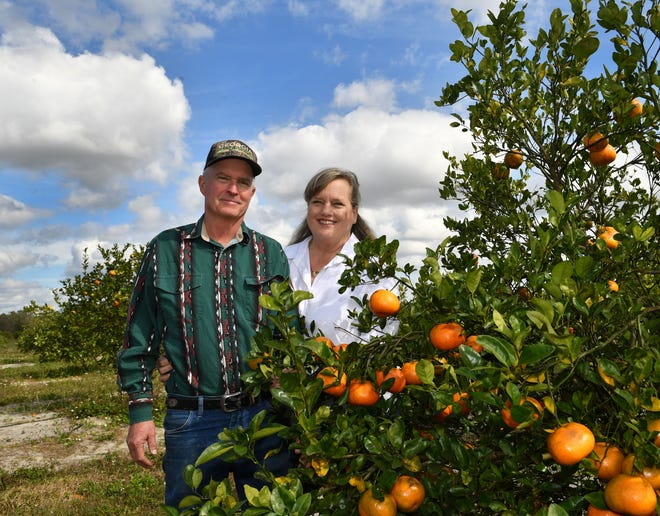 Tim and Hiedi Brown, owners of Brown's Grove have left the  downtown Sarasota Farmer's Market after 20 years and are selling their produce at their own grovestand. They also ship gift boxes of citrus from their packinghouse.