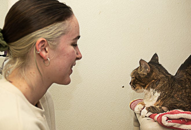 Patricia Bouteneff says hello to new family membr Grace, the $10,000 cat who previously spent 8 years waiting for a home. [Bill Hand / Sun Journal Staff]
