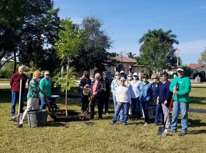 On Jan. 15, in honor of Florida Arbor Day, Calusa Garden Club members gathered at Leigh Plummer Memorial Park to plant two native trees.