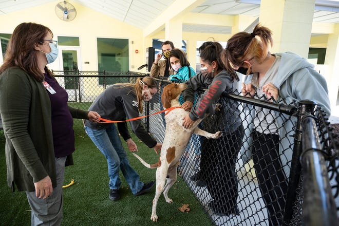 Students take part on the first day of Lake Technical College's new veterinary assisting program at the Lake County Animal Shelter.