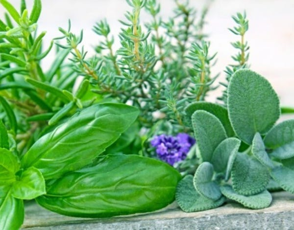 Houseplants can bring life to any home. In Florida, many of them can also survive outdoors.