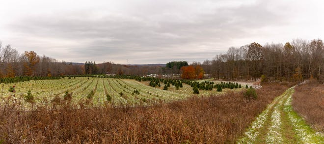 The Tree Farm Trail is a favorite winter destination in Cuyahoga Valley National Park.
