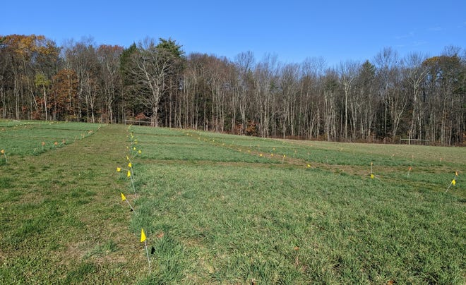 Scientists are conducting forage legume research at the experiment station's Kingman Research Farm in Madbury.