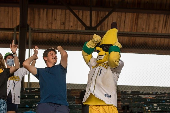 Savannah Bananas mascot, Split, dances with a fan during a game last summer at  Grayson Stadium.