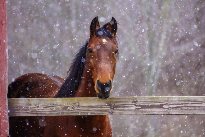 Winter weather isn't the only time for serving up a nice warm mash for your horse.