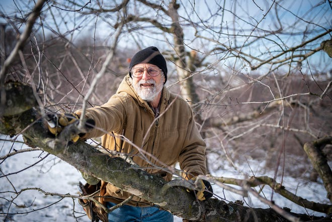 Don Kretschmann trims apple trees for his daughter's business on his organic farm in New Sewickley Township.