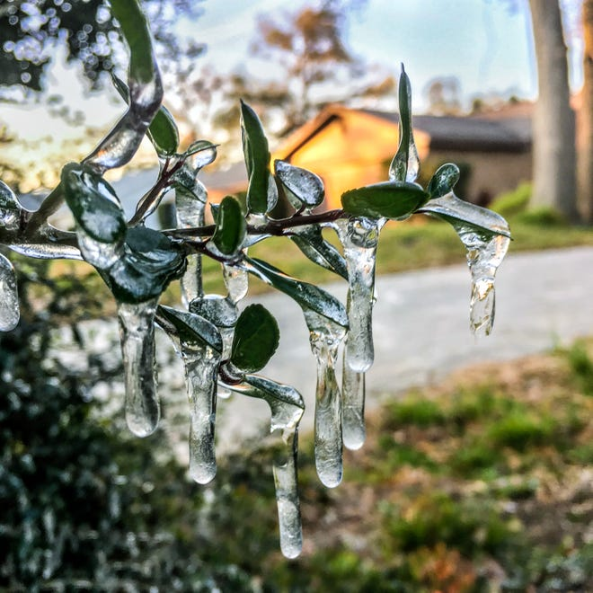 The last time the Darwinian Gardener encountered a freeze in his yard was on a frosty January morning in 2018.