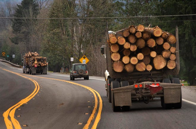A steady stream of trucks continue to transport logs out of the burn area of the McKenzie River months after the Holiday Farm Fire swept through the area.