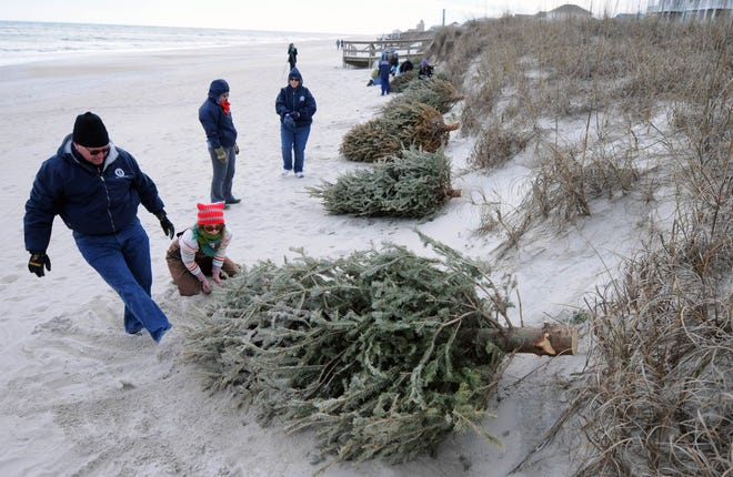 Al Watkins, left, and Maggie Geck secure a Christmas tree during a Christmas tree recycling program for dune establishment at Carolina Beach in 2014.