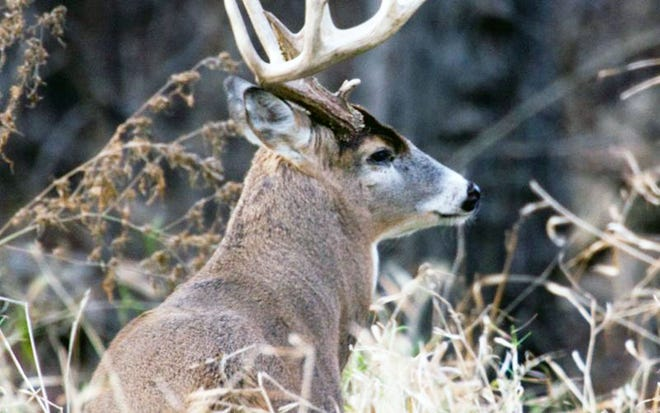 MDC reports the preliminary total deer harvest for the past season at 296,516. Archery deer season ended with 67,180 deer checked, and archery turkey season closed with 2,905 turkeys checked.