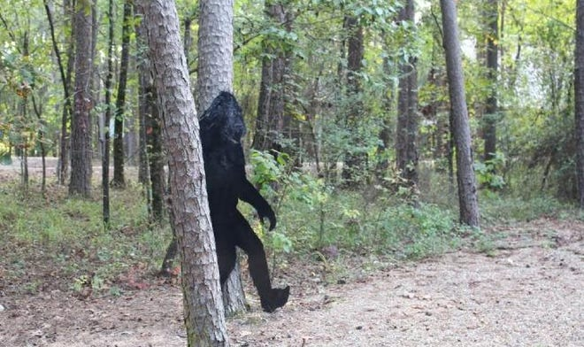 This photo of a metal cutout of Bigfoot was taken at a cabin in Hochatown, where Bigfoot items are a popular seller by merchants.
