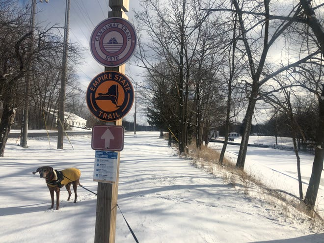 Rosie's ears flap in the wind on this wintery walk along the Erie Canalway Trail in Newark.