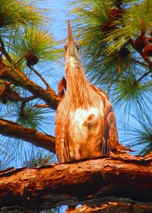 Crazy eyes peering down from this heron in Marsh Creek.