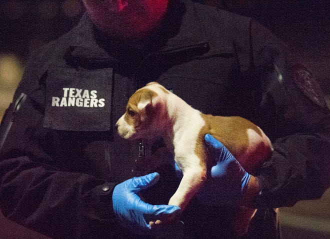 Officers found a puppy hiding inside a vehicle that was in a pursuit Sunday morning.