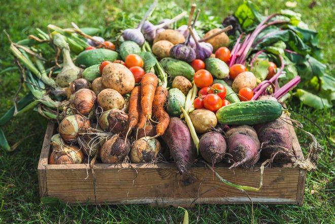 Fresh farm vegetables in a wooden box.